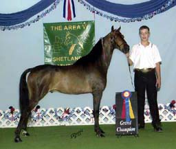 ASPC Modern Shetland gelding RFP Change of Luck sired by RFP Time For A Change with Junior Handler Ethan Kovarik at age 9.